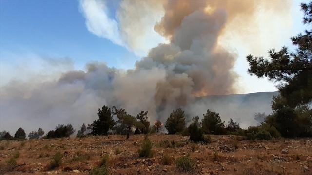 Uşak'ta 2 farklı noktada orman yangını