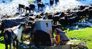 Karakeçili Yörüklerinin zorlu kış göçü