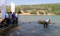Uşak'ta 100 bin yavru  pullu sazan balığı göl ve göletlere bırakıldı