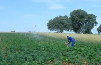 Kenevir üretimiyle çiftçinin geliri kat kat artacak
