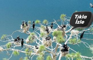 """Uşak'ın """"Saklı cennet""""inde kuş sayısında rekor artış"""